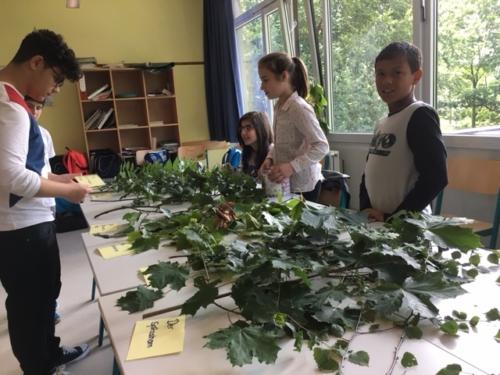 Schülerinnen und Schüler beim Bestimmen von Bäumen anhand ihrer Blätter